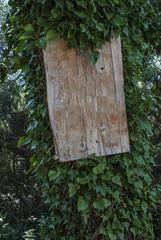 Bulletin board on overgrown pole