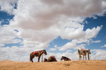 horses  rest in desert