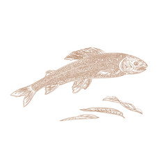 Trout as vintage engraved vector illustration