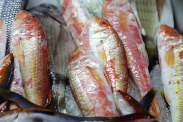 pescato di triglie