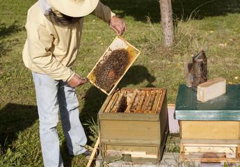 German beekeeping