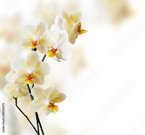 Fotobehang Bloemen Beautiful white orchid