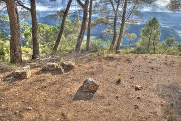 La Alcarria forests