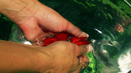 Woman taking tomatoes from water, closeup, slow motion shot