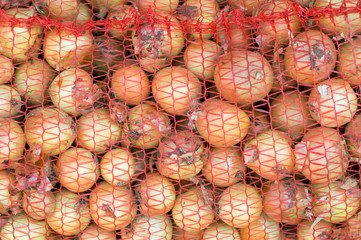 Yellow onions in a red net bag