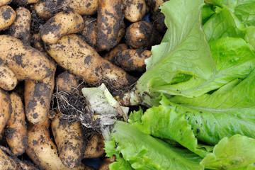 légumes bio du jardin 2