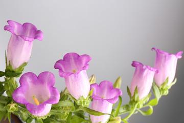 Beautiful wild flowers on grey background