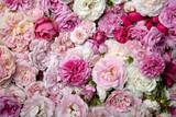 Fototapety Roses