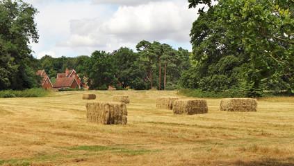 English Summer rural Landscape