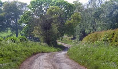 Pretty English lane