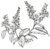 Fototapety Sketch of spring flowers