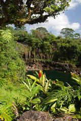 Rainbow Falls, Big Isalnd, Hawaii..