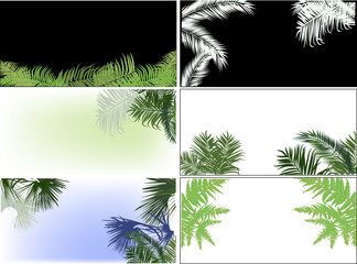 palm and fern leaves six compositions