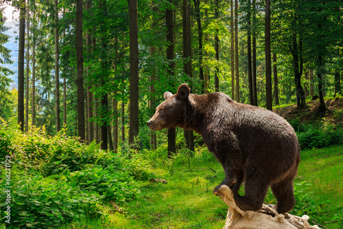 Aluminium Dragen curious little bear in the forest