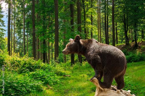 Fotobehang Dragen curious little bear in the forest