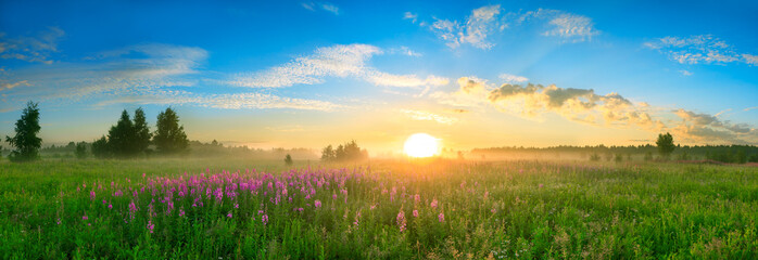 landscape with the sunrise, a blossoming meadow  panorama