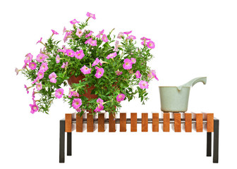 Pink petunia flowers on wooden bench isolated on white backgroun
