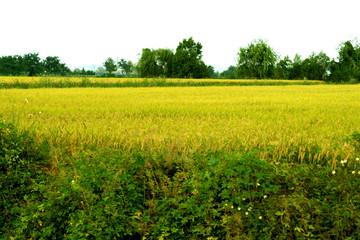 농업과 농작물