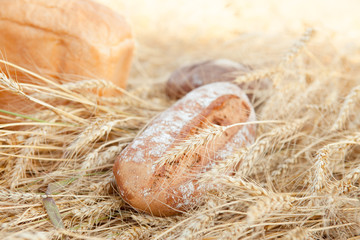Freshly baked traditional bread in field of wheat
