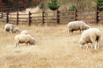 동물과 축산업