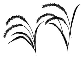 稲イラ_3