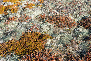 Arctic vegetation