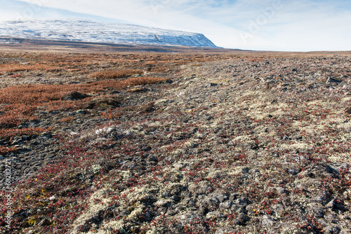 Arctic landscape in summer