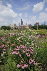 Chicago Illinois skyline with Sears tower and flowers