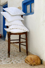 Chat à Paros