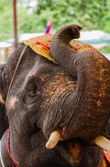 Ayutthaya Elephant Palace & Royal Kraal , Ayutthaya , Thailand 1