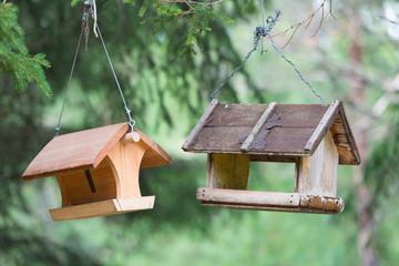 casa uccelli bosco