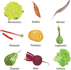 set of different vegetables isolated