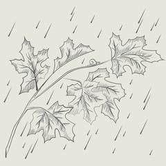 Maple tree branch in the rain