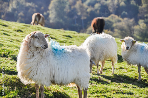 Papiers peints Sheep Flock of sheep at Pyrenees, Navarre (Spain)