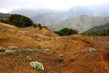 Volcanic flowers