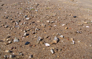 Baltic Beach sand close up