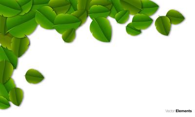 foglie, verdi