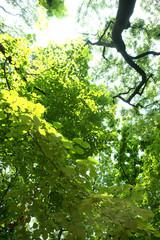 나무와 숲