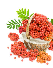 red rowan berries in a wicker basket on a white background
