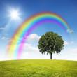 Regenbogen über den Baum