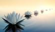 Leinwandbild Motiv Lotus im See 2