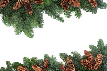 Fir and Pine Cone Border