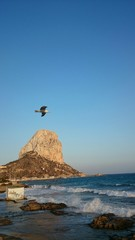 Gaviota volando junto al peñón de Ifach