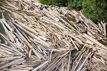 Logs Morain Lake Canada