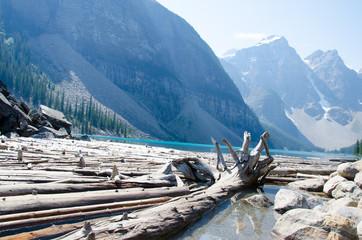 Drift wood Morain Lake Canada