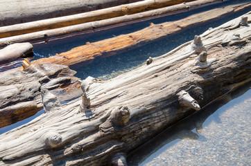 Drift wood on a Lake Canada