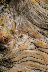 Tree rings pattern macro