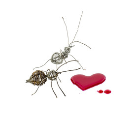 Steel ant and heart syrup