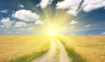 country road in wheat field to sun