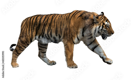 Deurstickers Tijger isolated on white striped tiger